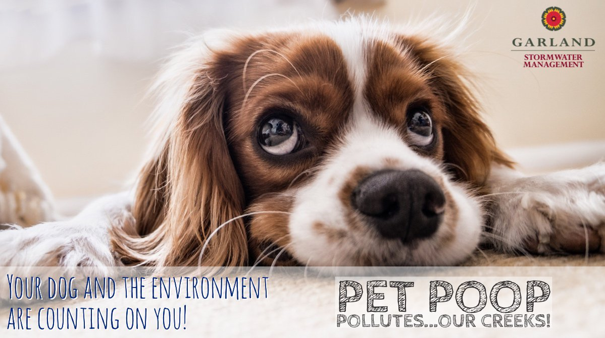 Photo of cute Cocker Spaniel with Pet Poop Pollutes message from Stormwater Management